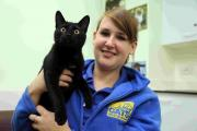 VIDEO: Meet Laurie, the stowaway cat found in a lorry from France in need a new home